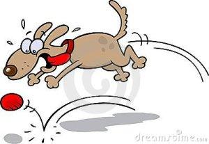 dog-chasing-ball-7946297